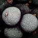 Frozen Black Currant