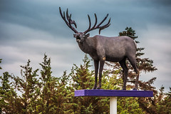 Vermilion Elk Statue (Bracus Triticum) Tags: アルバータ州 alberta canada カナダ 7月 七月 文月 shichigatsu fumizuki bookmonth 2019 reiwa summer july vermilion elk statue