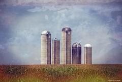 Silo skyline....HSS!!! (Joe Hengel) Tags: siloskyline stevens stevenspa pa pennsylvania lancastercounty farm silos silo texture sky clouds summer summertime cornfield hss happyslidersunday slidersunday field