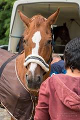 A9907869_s (AndiP66) Tags: pferdesporttage dubenmoos pferdesporttagedubenmoos reitvereinsolothurn 17august2019 solothurn august 2019 springen pferd horse schweiz switzerland kantonsolothurn cantonsolothurn concours wettbewerb horsejumping equestrian sports springreiten pferdespringen pferdesport sport sony alpha sonyalpha 99markii 99ii 99m2 a99ii ilca99m2 slta99ii sony2470mmf28zassmii 2470mm sal2470z2 f28 zassmii zeiss variosonnar amount andreaspeters