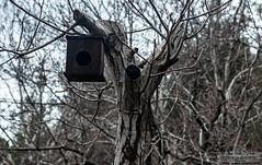 Bird Nest (zulkifaltin) Tags: türkiye kahramanmaraş kapıçam tabiat park manzara landscape beautiful nature doğa tree ağaç bird home nest