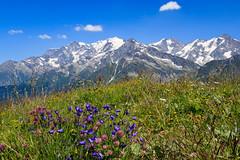 Un été en Savoie (07/2019) (gerardcarron) Tags: montblanc beaufortin savoie ete paysage fleurs flowers summer moutains montagne landscape