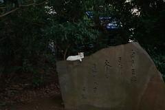 Cat (t_eriguchi) Tags: cat stones monument haiku yokohama 猫