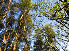 "Treetops • <a style=""font-size:0.8em;"" href=""http://www.flickr.com/photos/136447376@N03/48565887022/"" target=""_blank"">View on Flickr</a>"