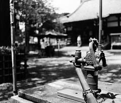 IMG_20190814_0001 (Dinasty_Oomae) Tags: graflex グラフレックス nationalgraflex ナショナルグラフレックス 白黒写真 白黒 monochrome blackandwhite blackwhite bw outdoor 東京都 東京 tokyo 中野区 nakano 新井薬師 araiyakushi 神社 shrine