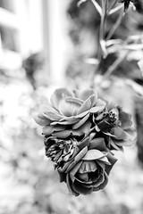 Roses are Red (Katzenfutter) Tags: monochrome blackwhite schwarzweiss 35mm nikkor nikon rose flower