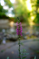 Flower on the bank (vorkell) Tags: nature brampton ontario flower