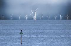 Cormorant perch (Gill Stafford) Tags: gillstafford gillys image photograph wales northwales conwy wind farm turbines power electricity bird sea cormorant