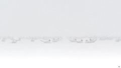 ''La brume!'' Mouette bonaparte (Escoumins) (pascaleforest) Tags: canada quebec faune wildlife wild nature nikon voyage animal bird oiseau brume mist ambiance