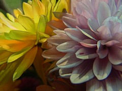 Happy Sliders Sunday (novice09) Tags: flowers slidersunday hss ipiccy deepdreamgenerator textures