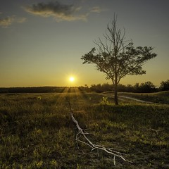 Lonely tree (Gergő Kardos) Tags: colorful walking calm tree landscape nature sunset