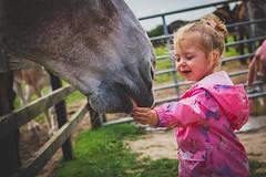 Donkey sanctuary with Zayla (Andy barclay) Tags: donkey horse pony carrots feeding food greedy hungry farm sanctuary baby todler pink summer lincolnshire uk england nikon sigma cute