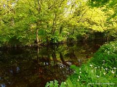 Mill river (patrickcolhoun) Tags: buncrana landscape millriver donegal nature reflection ireland countydonegal scenery trees inishowen