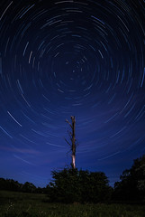 The Circumpolar and the Tree (The_Forgotten_Legacy) Tags: astronomy astrophoto astrophotography astrophotographer astronomie astrolove astrophotographie astroshoot astroĥotography circumpolar stars stair starhunter shootingstars tree nature naturelover
