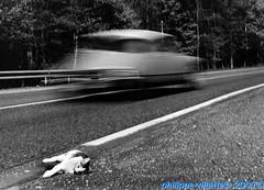 La DS et le chat (villatte.philippe) Tags: chat chiens animaux citroen ds accident de la route retour weekend