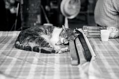 sleep (ciel*paradis) Tags: fujifilm xt10 xf35mmf14r cat taiwan taichung blackandwhite bw