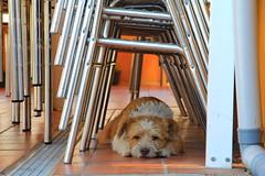 Buscando la sombra (Micheo) Tags: spain perro dog shade sombra calor horadelasiesta hot summer