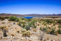 Alamo Lake State Park, Arizona (Buck--Fever) Tags: alamolakestatepark alamolake arizona arizonadesert arizonawonders waterinthedesert arizonastateparks landscape