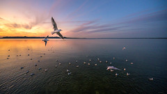 Chiemsee (Robert F. Photography) Tags: möwe sunset sun sunlight chiemsee germany deutschland see wather animal tier