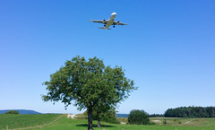 arrival Zurich (Swissrock-II) Tags: landing arrival aircraft kloten zurich switzerland tree field ankunft landung mobile 2019 august swiss