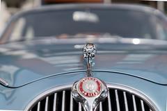 Jaguar (jactoll) Tags: alcester warwickshire cars jaguar cat sony a7iii sony2470mmf28gm jactoll