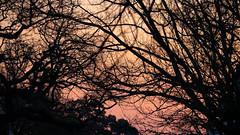 Everything but the street (1000elephants) Tags: sunset silhoutte canon 77d stellenbosch