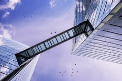 Blueish Sky Limit (frank_w_aus_l) Tags: muenster nikon df ais 50mm prime birds architecture architektur kristall reflection sky skyscraper city deep glass blue blueish white münster nordrheinwestfalen deutschland