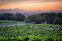 Healdsburg-6 (Nancy McPeak) Tags: sanfransisco epicphotoreunions winery sunset landscape california healdsburg grapes grapevines mountains sony a7rii