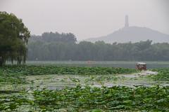 A travers les Lotus (Aphélie) Tags: china chine pékin beijing 中国 北京 summer palace palais été ship bateau lac lake fog brouillard