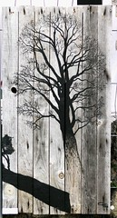 Frédéric CALVET (Thethe35400) Tags: arbre tree árvore baum zuhaitz árbol albero