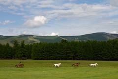 Sous le Vent (Aphélie) Tags: chemin path paysage nature landscape steppe mongolie mongolia horse race chevaux course outside