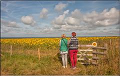 Rhossili Bay, Gower. (Sunflowers) (Crowbuster) Tags: rhossili bay sunflowers gower landscape national trust field flowers swansea abertawe wales welsh cymru coastline peninsular yellow gate fence gwyr