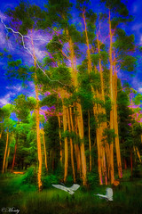 Fantasy Forrest :) (concho cowboy) Tags: white mountains arizona forrest fantasy