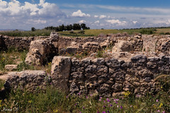 Ruins of time (Irina1010) Tags: ruins archaeologicalsite volubilis morocco stones flowers landscape sky clouds beautiful ruinsoftime canon