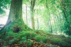 standhaft - Sony RX0M2 (Andreas Voegele) Tags: sony sonyrx0ii sonyrx0m2 rx0ii rx0m2 forest green nature natur wald landscape landschaft waldundlicht
