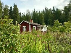 A Small House🏡🌲 (halleluja2014) Tags: summer august sweden dalarna falun uggelviken trädgård garden forest 🏡 small house stuga