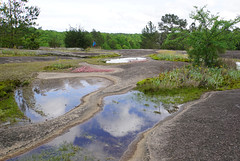 40 Japanese gardens (anne.kane) Tags: 40acrerock southcarolina wildflowers waterfalls naatureconservancy
