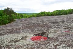 29 vast expanse of bare rock (anne.kane) Tags: 40acrerock southcarolina wildflowers waterfalls naatureconservancy