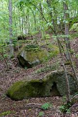 18 polypody colonies on the rocks (anne.kane) Tags: 40acrerock southcarolina wildflowers waterfalls naatureconservancy
