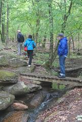 16 stream crossing (anne.kane) Tags: 40acrerock southcarolina wildflowers waterfalls naatureconservancy