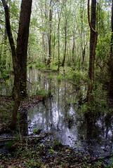 4 skirting the beaver pond (anne.kane) Tags: 40acrerock southcarolina wildflowers waterfalls naatureconservancy