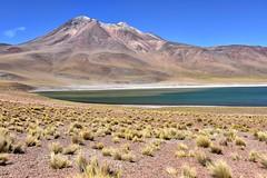 Laguna Miñiques (RobertLx) Tags: laguna lake miñiques miscanti volcano altiplano theandes chile nature landscape arid 64 lagunamiñiques grass water losflamencos atacama