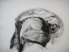 THE PSYCHOPATH (Sketchbook0918) Tags: crow corvid wildlife animal bird drawing sketch study paper charcoal graphite eye beak art fineart portrait illustration nature environment