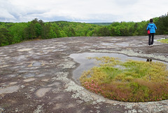 33 hundreds of puddles (anne.kane) Tags: 40acrerock southcarolina wildflowers waterfalls naatureconservancy