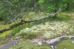 23 alpine moss garden (anne.kane) Tags: 40acrerock southcarolina wildflowers waterfalls naatureconservancy