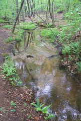 20 the trail winds along the stream (anne.kane) Tags: 40acrerock southcarolina wildflowers waterfalls naatureconservancy