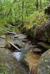 9 weeping wall (anne.kane) Tags: 40acrerock southcarolina wildflowers waterfalls naatureconservancy