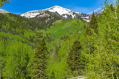 LaPlataCanyon_157 (allen ramlow) Tags: la plata canyon colorado landscape scenery scenic nature outdoors snowcapped mountain trees blue sky sony alpha a7iii