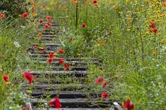 20190811_AugustMix2019_1876 (ShakeyDave) Tags: d750 nikon park golden acre leeds city flowers colour summer 2019 august david stevens west yorkshire