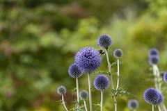 20190811_AugustMix2019_1863 (ShakeyDave) Tags: d750 nikon park golden acre leeds city flowers colour summer 2019 august david stevens west yorkshire